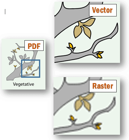 vector vs raster example