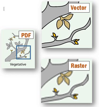 vector vs raster example